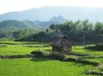 laosikona