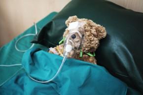 An injured teddy bear at the hospital
